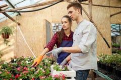 Faceta i dziewczyny ogrodniczki wybierają garnki z kwiat rozsadami w szklarni na słonecznym dniu obraz royalty free