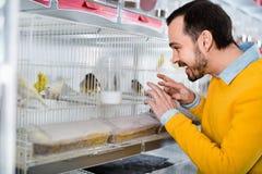 Faceta klient egzamininuje różnorodnych ptasich gatunki w zwierzę domowe sklepie Zdjęcie Stock