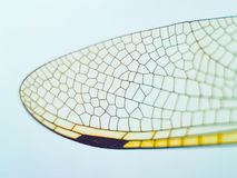 Faceted dragonfly wings close up royalty free stock image