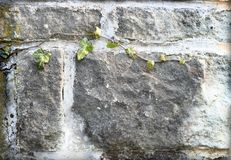 Fachada da parede com planta verde imagem de stock royalty free