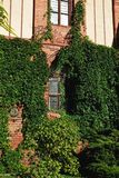 Fachada de los edificios de ladrillo rojo, hiedra Foto de archivo libre de regalías