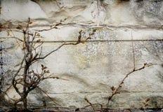 Fachada escura da parede Imagem de Stock Royalty Free