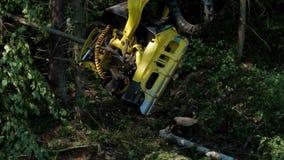 Fachkundige Holzfäller Buncher-Sägen hackten Baumstamm stock video footage