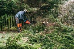 Fachowa ogrodniczka używa piłę łańcuchową zdjęcia stock