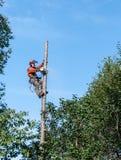 Fachowego lumberjack tnący drzewo na wierzchołku Zdjęcia Royalty Free
