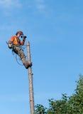 Fachowego lumberjack tnący drzewo na wierzchołku z piłą łańcuchową Obraz Royalty Free