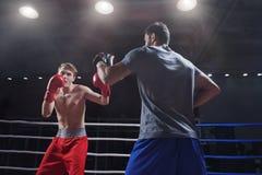 Fachowi boksery zdjęcie stock