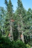Fachowi lumberjacks ciie drzewa na wierzchołku Fotografia Stock