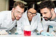 Fachowi młodzi chemicy patrzeje kolbę z odczynnikiem w laboratorium Zdjęcie Royalty Free