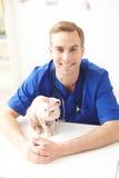 Fachowy męski weterynarz pracuje z zwierzęciem domowym Zdjęcia Royalty Free