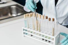 Fachowy naukowiec robi eksperymentowi z pszenicznymi ucho w próbnych tubkach obrazy royalty free