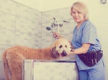 Fachowy obmycie szczeniak w włosianym salonie dla zwierząt fotografia stock
