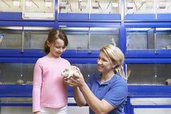 Fachverkäufer, der Mädchen-Meerschweinchen im Haustier-Speicher zeigt Stockbilder