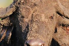 Facial del fango Imagen de archivo