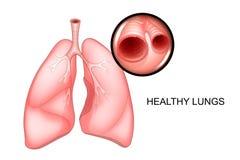 Facile sano bronco puro illustrazione vettoriale