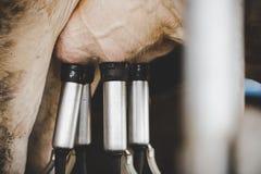 Facilidade de ordenha da vaca e mecanizado ordenhando o equipamento foto de stock