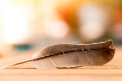 Facilità: Piuma su uno scrittorio di legno, spazio della copia immagini stock libere da diritti