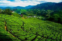 A facinating view at tea plantation in Cameron Highland. Malaysia Royalty Free Stock Photo