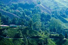A facinating view at tea plantation in Cameron Highland. Malaysia Royalty Free Stock Images