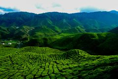 A facinating view at tea plantation in Cameron Highland. Malaysia Stock Images