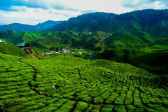 A facinating view at tea plantation in Cameron Highland. Malaysia Stock Photo