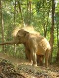 Facing the elephant Royalty Free Stock Photos