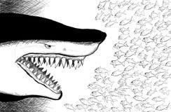 facing fiskar den små hajen vektor illustrationer