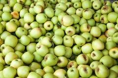 Fack av gröna äpplen efter nedgångskörd Royaltyfri Fotografi