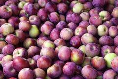 Fack av röda äpplen efter nedgångskörd Royaltyfri Bild