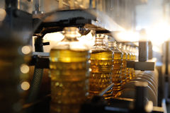 A factory for the production of sunflower oil. Sunflower oil. Line for the production and bottling of refined oil from sunflower seeds. Conveyor of food stock photo