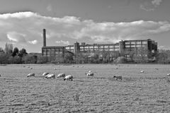 Factory and sheep. A factory and sheep, Keynsham, Somerset, England Stock Photos