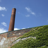 Factory Wall Covered With Ivy Royalty Free Stock Photos