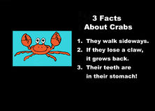 Facts about crabs Stock Images