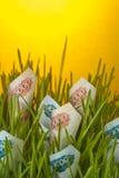 Factures de rouble s'élevant dans l'herbe verte Image stock