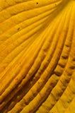Factures y detalles coloreados otoño del fragmento de la hoja. Imágenes de archivo libres de regalías