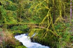 A fada gosta de ajustar-se em Cedar Creek fotos de stock royalty free