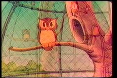 Fade in caged owl
