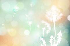 Faded dandelions silhouette and blurred background Royalty Free Stock Photography