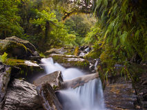 Faded forest stream. A fast flowing forest stream Stock Photo