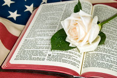white rose on open Holy Bible on Royalty Free Stock Photo