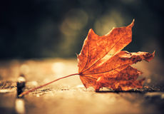 Faded leaf Stock Photography