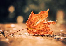 Faded leaf Stock Images