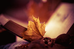 Faded leaf and vintage book Royalty Free Stock Photos