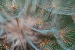 Faded plant. For decoration green and brown stock photos