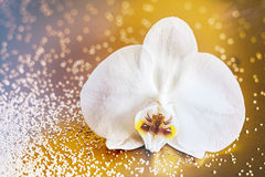 Faded retro white phalaenopsis orchid Royalty Free Stock Photos