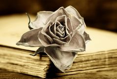 Faded rose Royalty Free Stock Photography