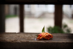 Faded rose. Discarded, Faded rose flower on the wooden stairs stock image
