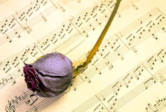 Faded rose on music Royalty Free Stock Photography