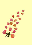 Faded Rose Petals. Design of faded pressed rose petals with a sprig of rose leaves, against a pale yellow background royalty free stock photo