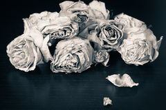 Faded roses. On a wooden table close up. Black and white stock photos